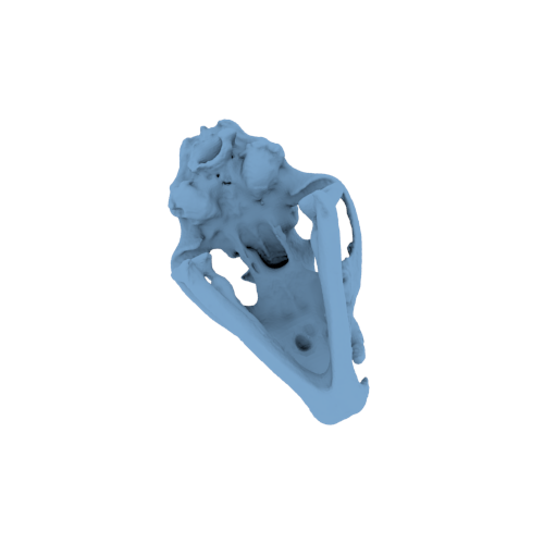 Mountain Lion Skull and Jaw | NIH 3D Print Exchange